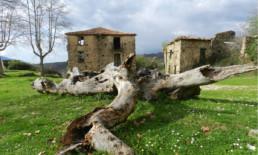 Roscigno Vecchia B&B Casa Albini